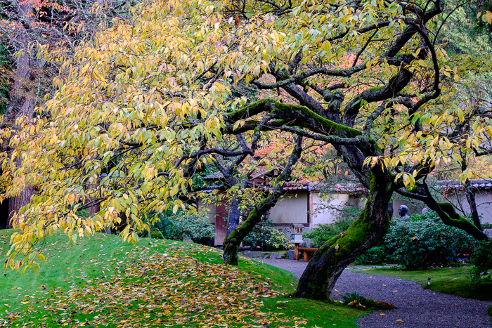 Pacific Northwest In Autumn - Fine art photography by Weaver ... on gallery j, gallery m, gallery a, gallery s, gallery d, gallery v, gallery k, gallery g, gallery q, gallery h, gallery b, gallery p, gallery n, gallery l, gallery e, gallery c, gallery i,